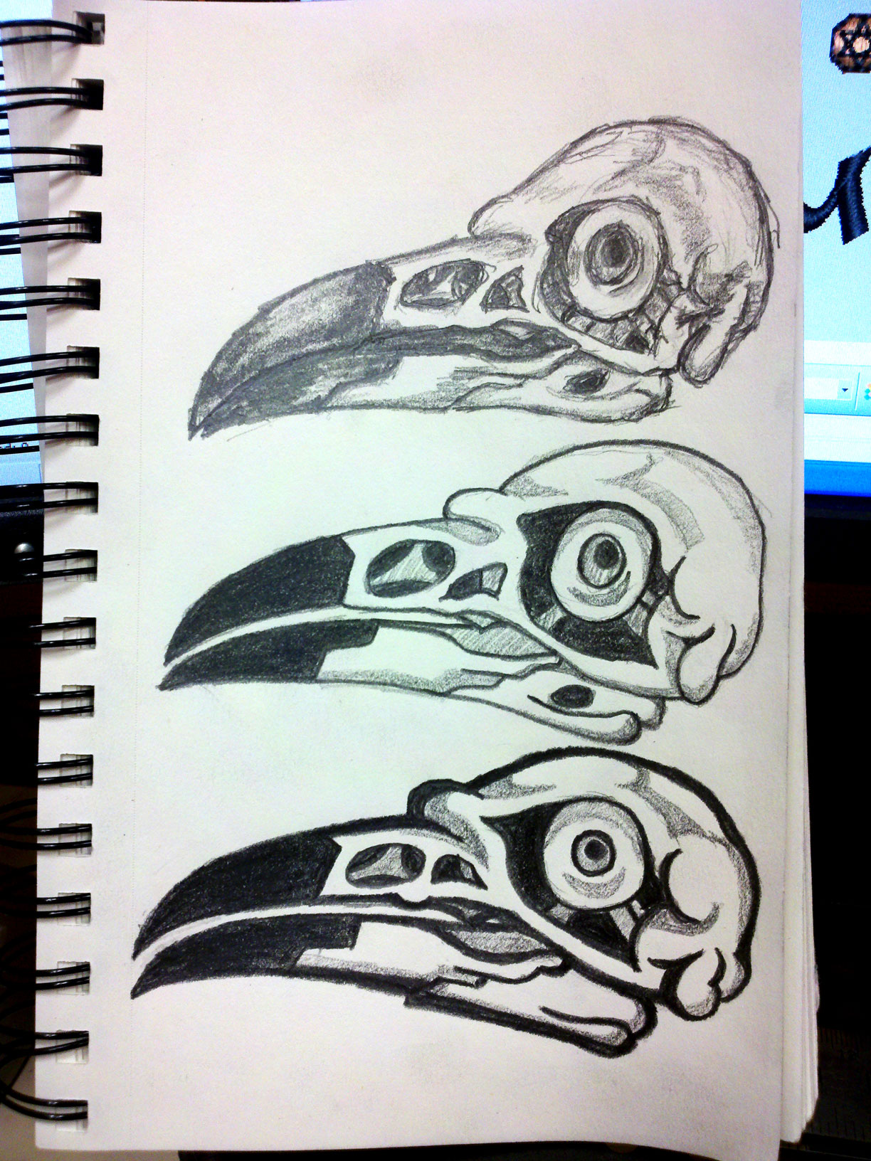 Raven Skull Drawing Refinement by Erich Campbell